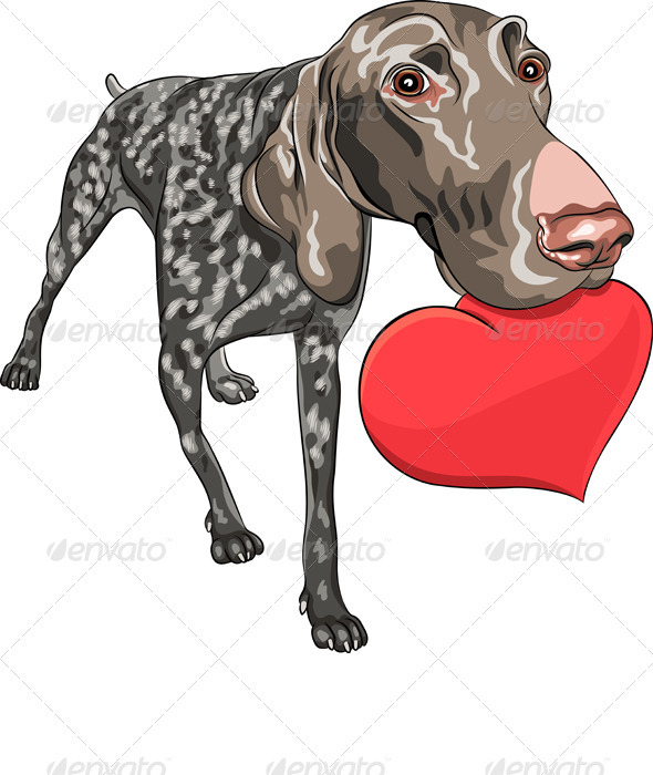 GraphicRiver Vector Dog Kurzhaar Breed Holding a Red Heart 3689728