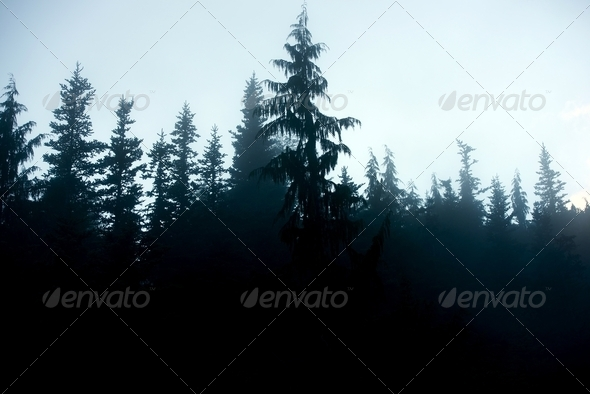 PhotoDune Dark Forest Background 3690624