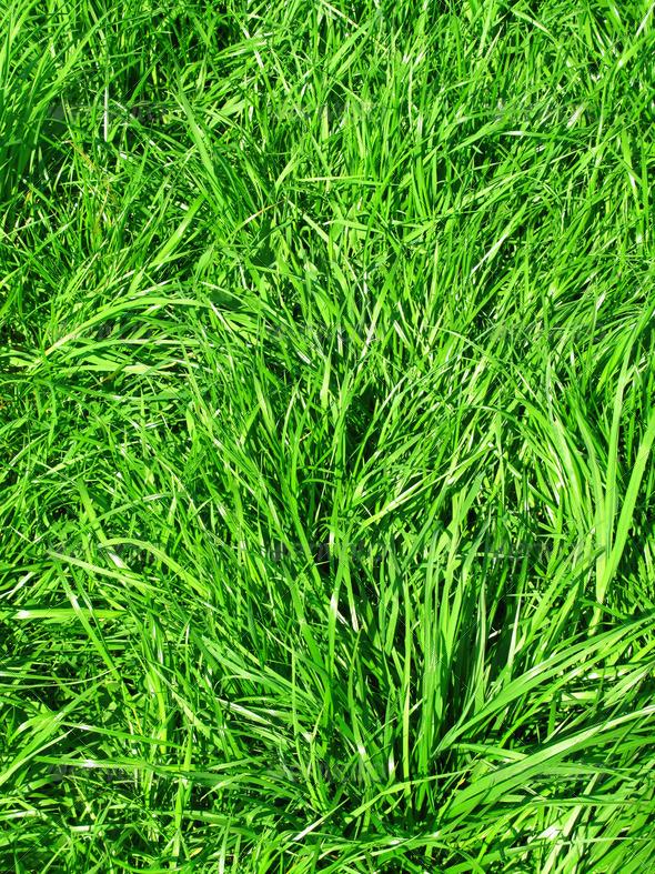 PhotoDune Fresh green grass 3692284