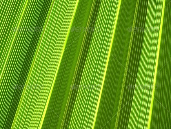 PhotoDune Palm leaf texture 3692295