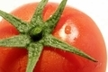 Tomato - PhotoDune Item for Sale