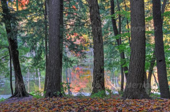 PhotoDune Tree Trunk Reflection 3720239