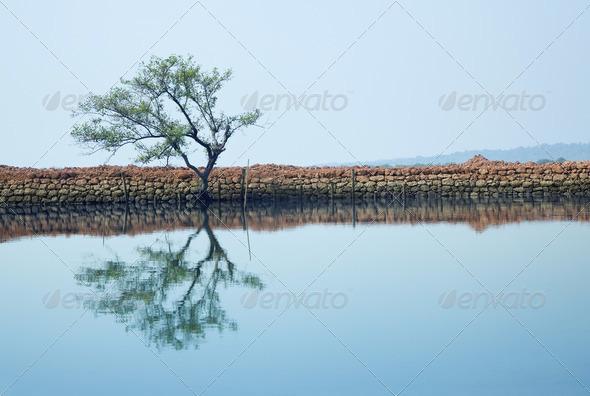 Tree - Stock Photo - Images