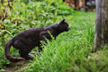 Dark Gray Cat Huntind - PhotoDune Item for Sale