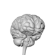 Professional Complite Human Brain - 3DOcean Item for Sale