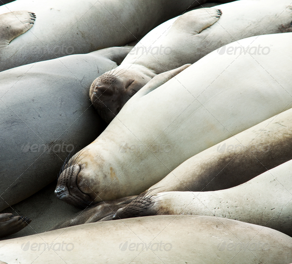 Sea lion - Stock Photo - Images