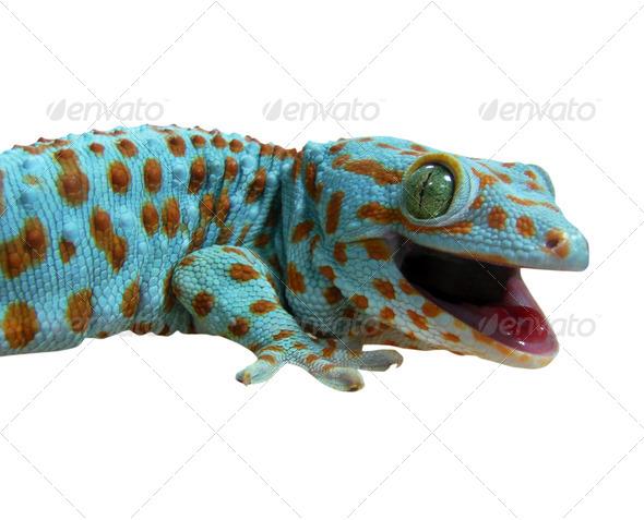 PhotoDune Gecko 3706785