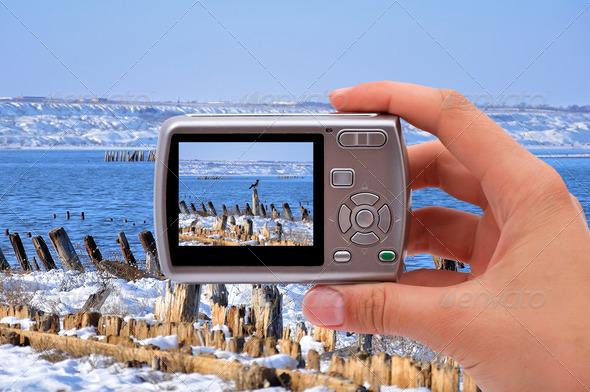 PhotoDune photographing nature 3706986