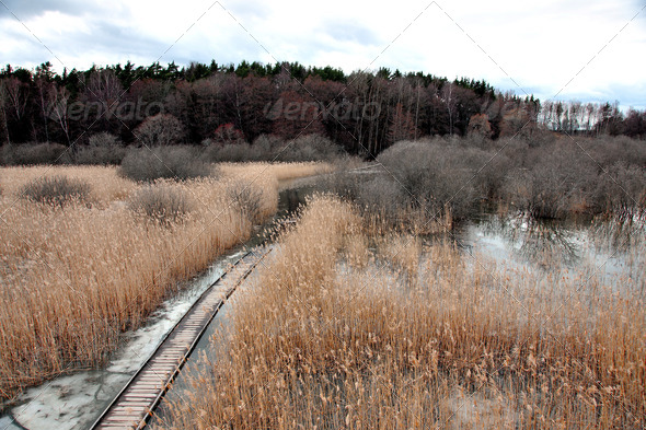 Swamp area with reeds ion late autumn or early winter - Stock Photo - Images