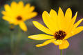 Two yellow flowers in a garden - PhotoDune Item for Sale