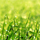 Green Grass 2 - VideoHive Item for Sale