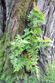 Plant Growing in Tree - PhotoDune Item for Sale