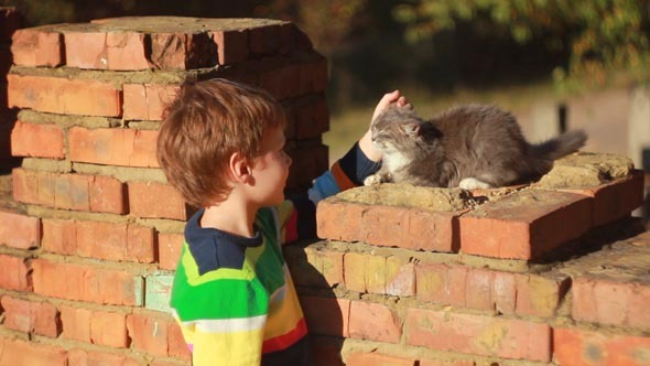 Boy Playing with a Cat 1
