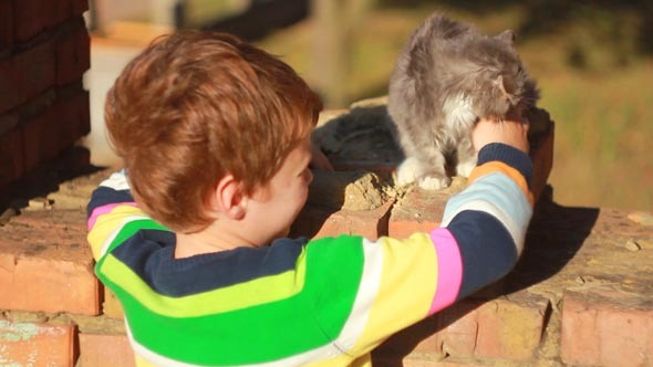 Boy Playing with a Cat 2