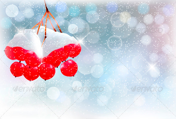 Holiday Background with Branch and Red Berries