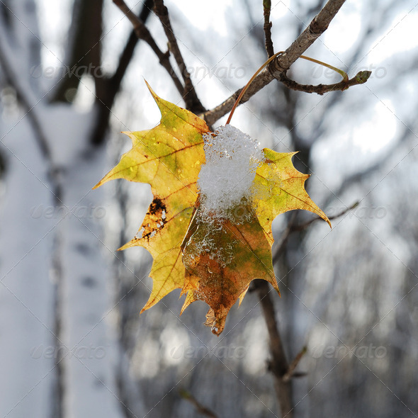 PhotoDune Leaf under snow 3720082