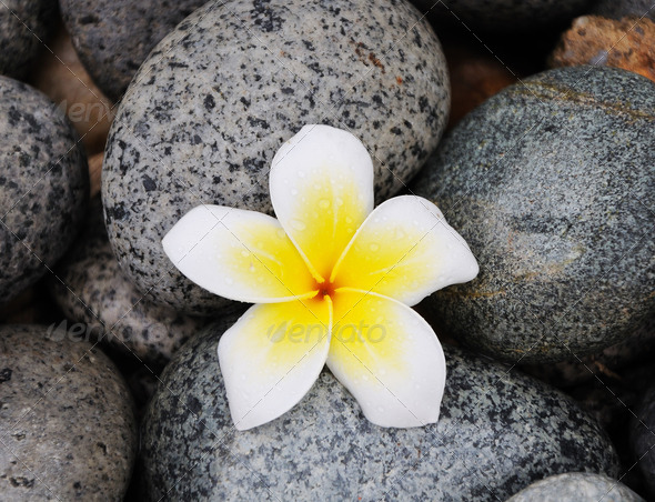 PhotoDune Frangipani flower on stones 3720085