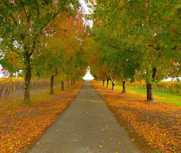 PhotoDune Autumn road 3720139