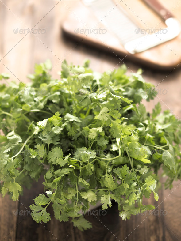 PhotoDune fresh coriander leaves 3720236