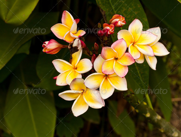 PhotoDune Beautiful spring flowers 3720304
