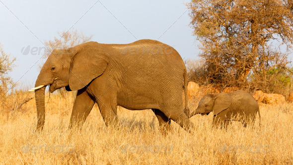 PhotoDune Elephant with Calf 3720476