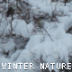 Winter Nature - VideoHive Item for Sale