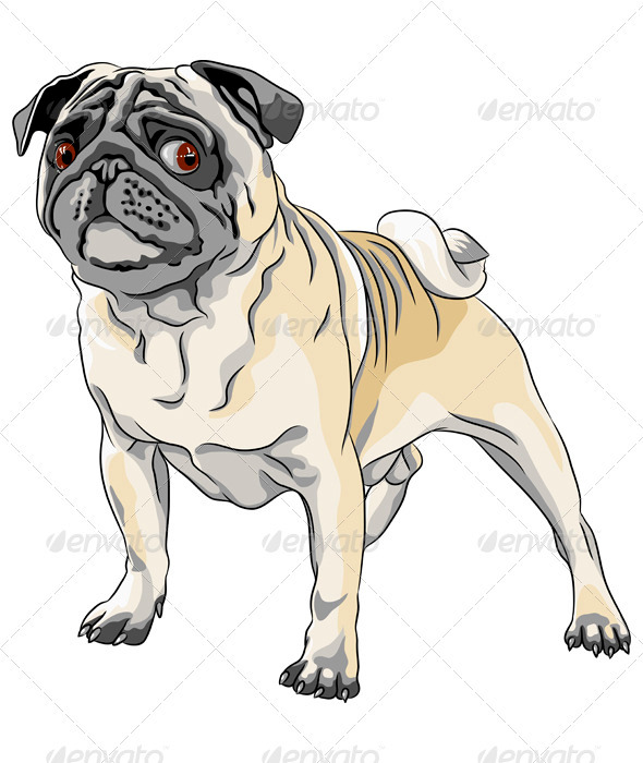 Vector Sketch Angry Dog Pug Breed  - Animals Characters
