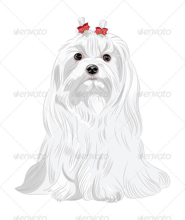GraphicRiver Vector Serious white Dog Maltese Breed Sitting 3727931