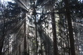 Sun Rays Penetrating Dark and Gloomy Forest - PhotoDune Item for Sale