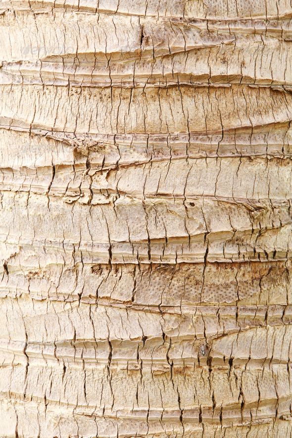 PhotoDune Coconut tree bark 3732452