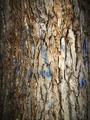 Old tree bark 2 - PhotoDune Item for Sale