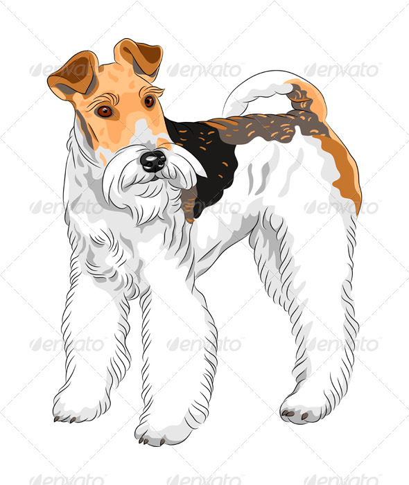 Vector Sketch Dog Wire Fox Terrier Breed