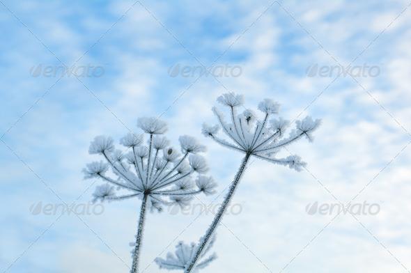 PhotoDune Winter landscape.Winter scene 3743630