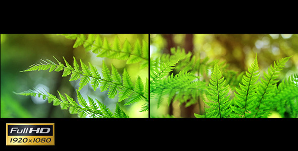 Sunny Ferns x2 Macro & Loopable
