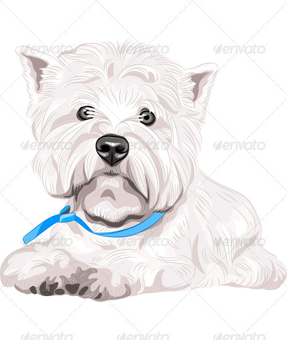 Vector Dog West Highland White Terrier Dreed - Animals Characters