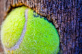 Tennis Ball Stuck In a Fence - PhotoDune Item for Sale