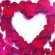 Love Roses Valentine's Day Loop 60Fps - VideoHive Item for Sale