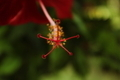 Close-up of Stamen of a Red Flower - PhotoDune Item for Sale