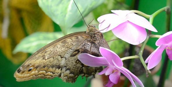 Butterflies 29