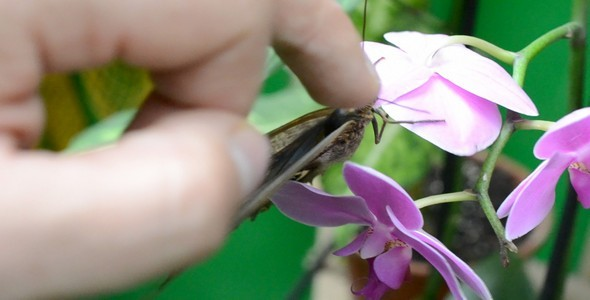 Butterflies 30