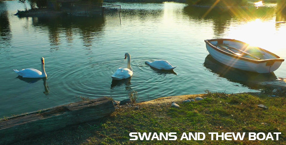Swan Family and the Boat in the Lake
