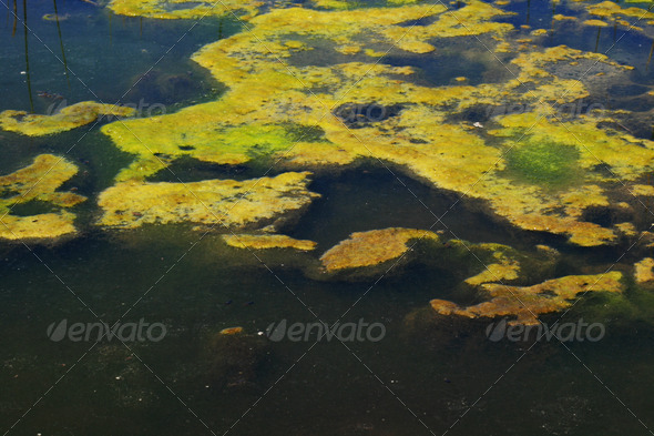 green algae - Stock Photo - Images