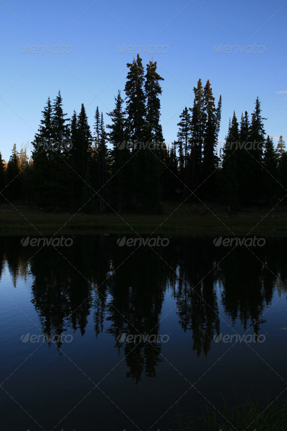 pine tree silhouettes - Stock Photo - Images