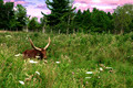 Romantic Buffalo - PhotoDune Item for Sale