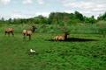 Herd of Deers - PhotoDune Item for Sale