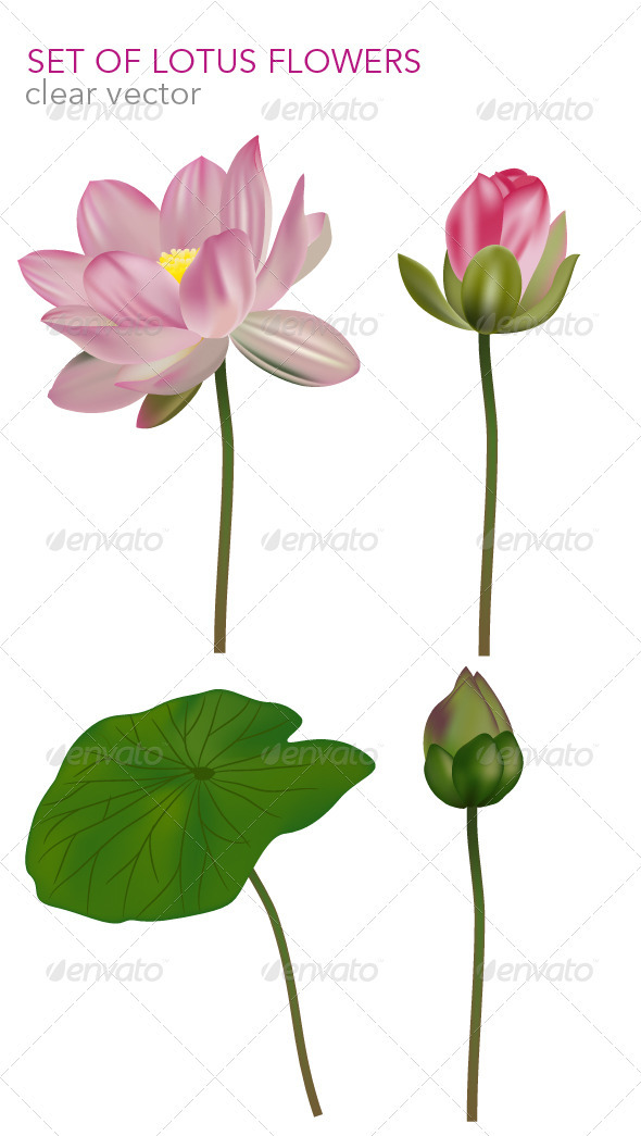 GraphicRiver Set of lotus flowers vector base 3781766