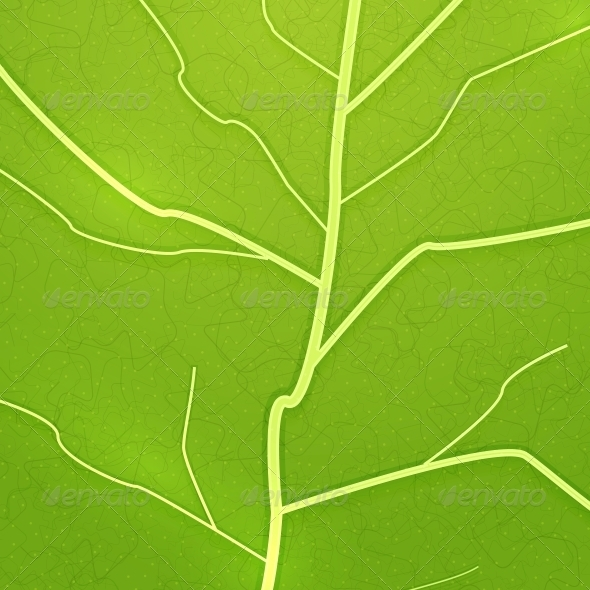 GraphicRiver Vector Fresh Green Leaf Texture 3783604