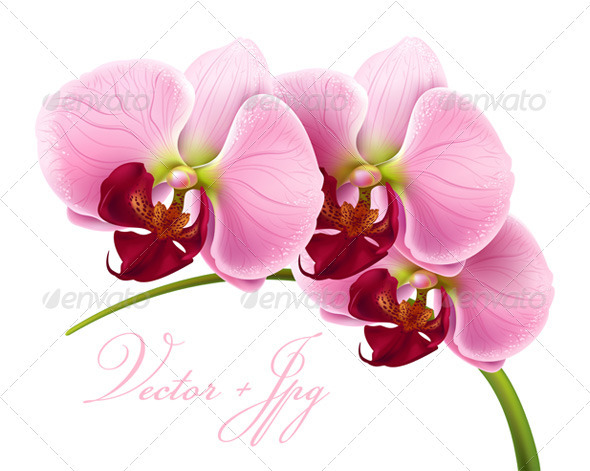GraphicRiver Orchid flower 100% vector & jpg 407661