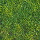 Green Grass - GraphicRiver Item for Sale