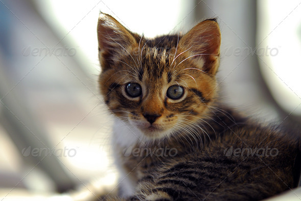 cute and Curious striped  kitten - Stock Photo - Images